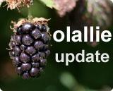 Olallie_update