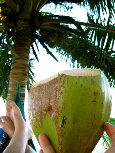 Coconut_in_hammock